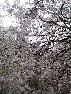 島根県加田の湯