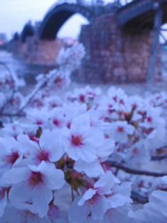 花盛りの錦帯橋