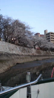 船上の夜桜