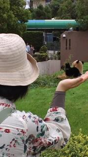 パンダ!パンダ!